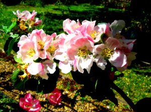 appleblossom_bright